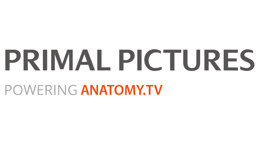 Primal Pictures Logo Vector